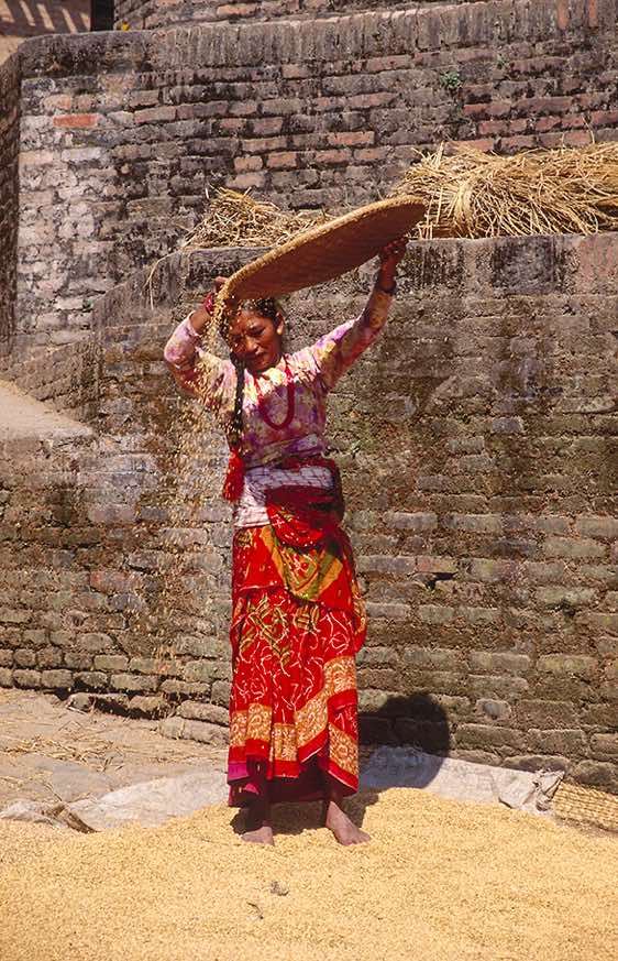 A woman winnows grain with a nanglo, Bhaktapur, Kathmandu Valley